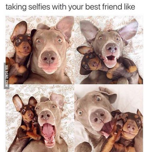 ac5ad889e402906dbc7bd201398caa27 taking selfies with your best friend like selfies, animal and dog
