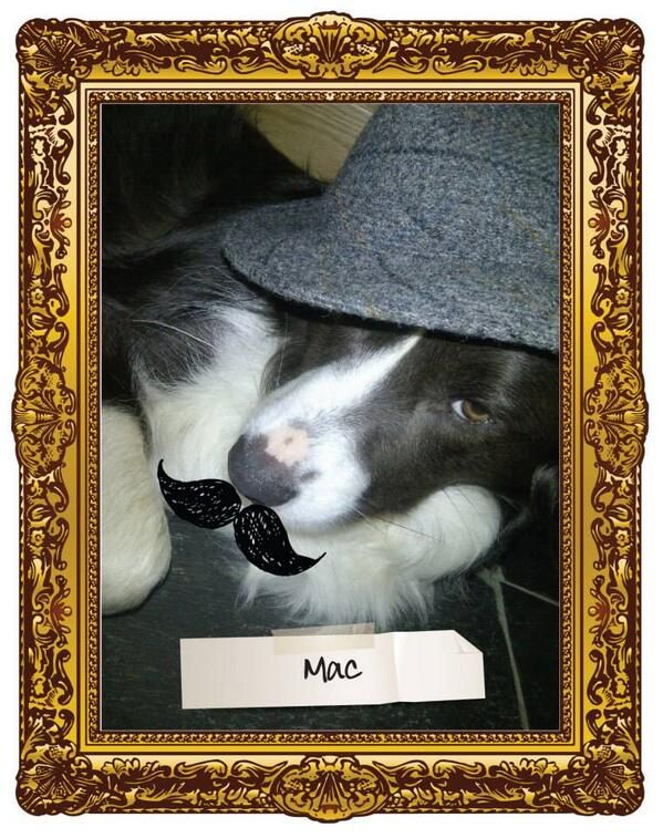 mac supporting #movember the @WOOF&BREW comp!
