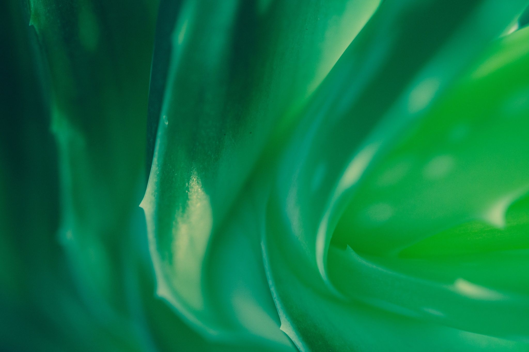 Abstract nature by TheMrGnu on 500px