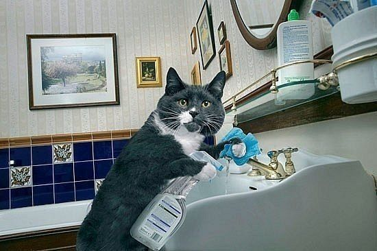 Image result for cleaning cat