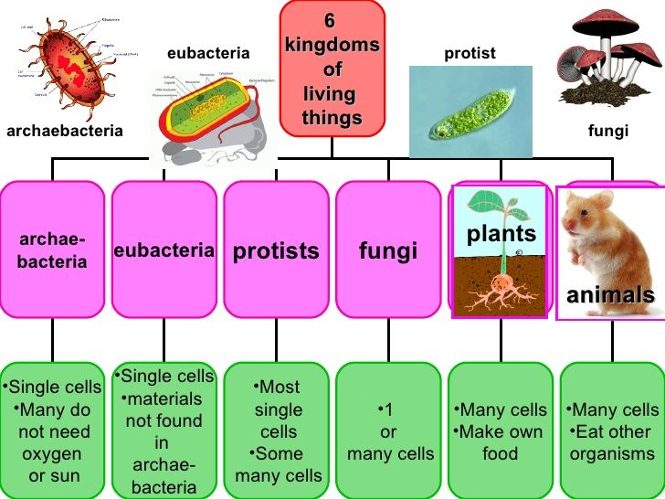 plants animals archaebacteria protist 6 kingdoms of living