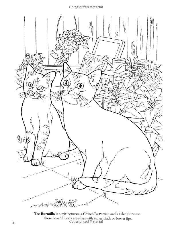 Amazon The Cat Lovers Coloring Book Dover Nature 9780486462004 Ruth Soffer Books