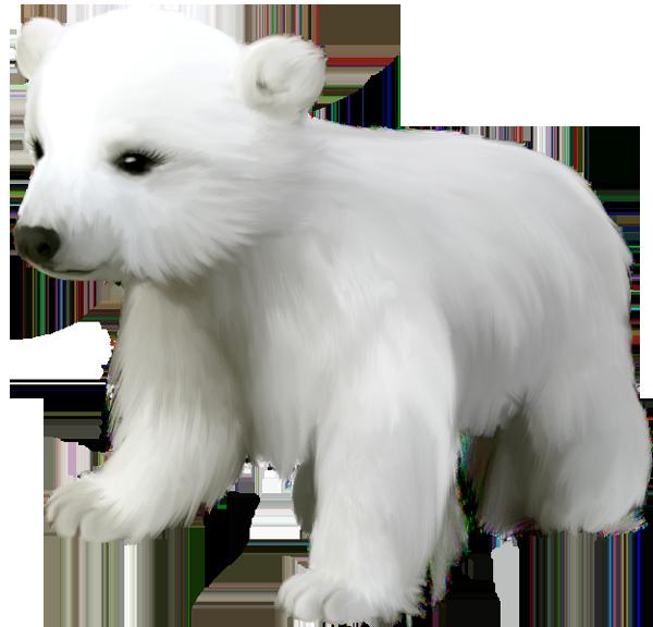 Cute Small Polar Bear Png Clipart Polar Bear Baby Polar Bears Polar Animals