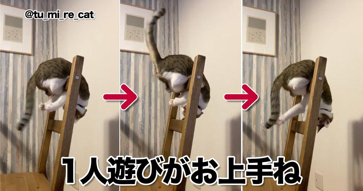 猫さん 一人遊びで忙しそうですが カメラ入りまーす 9選 一人遊び 猫 猫 家