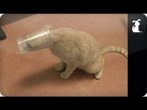Cat S Head Stuck In Plastic Cup Cat Vs Plastic Cup Funny Animals Funny Gif Plastic Cup