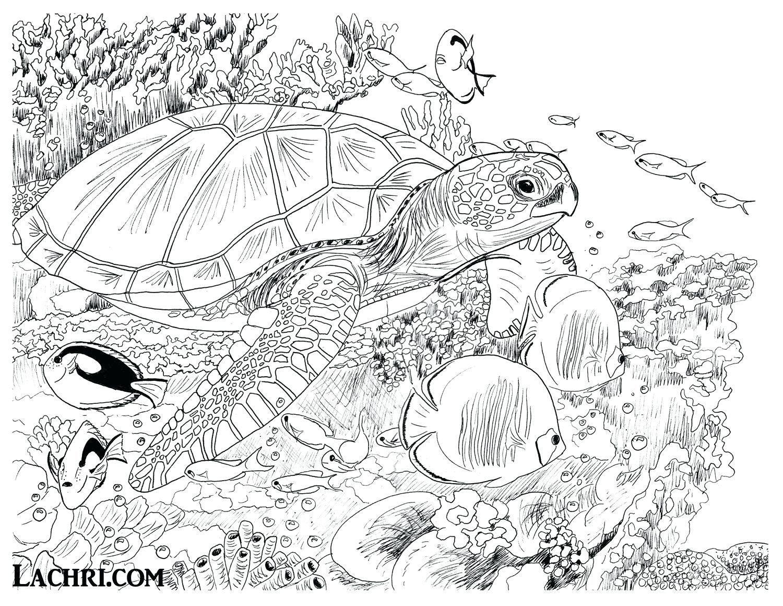 Sea Turtle Coloring Pages Unique Coloring Ideas Coloring Ideas Sea Turtle Page Pages T Turtle Coloring Pages Ocean Coloring Pages Animal Coloring Pages
