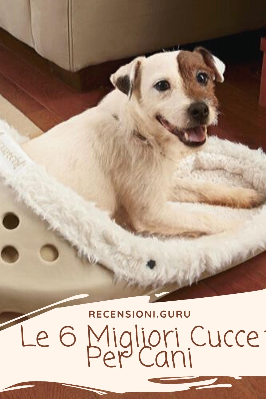 Cucce Piccole Per Cani pin su recensioni.guru