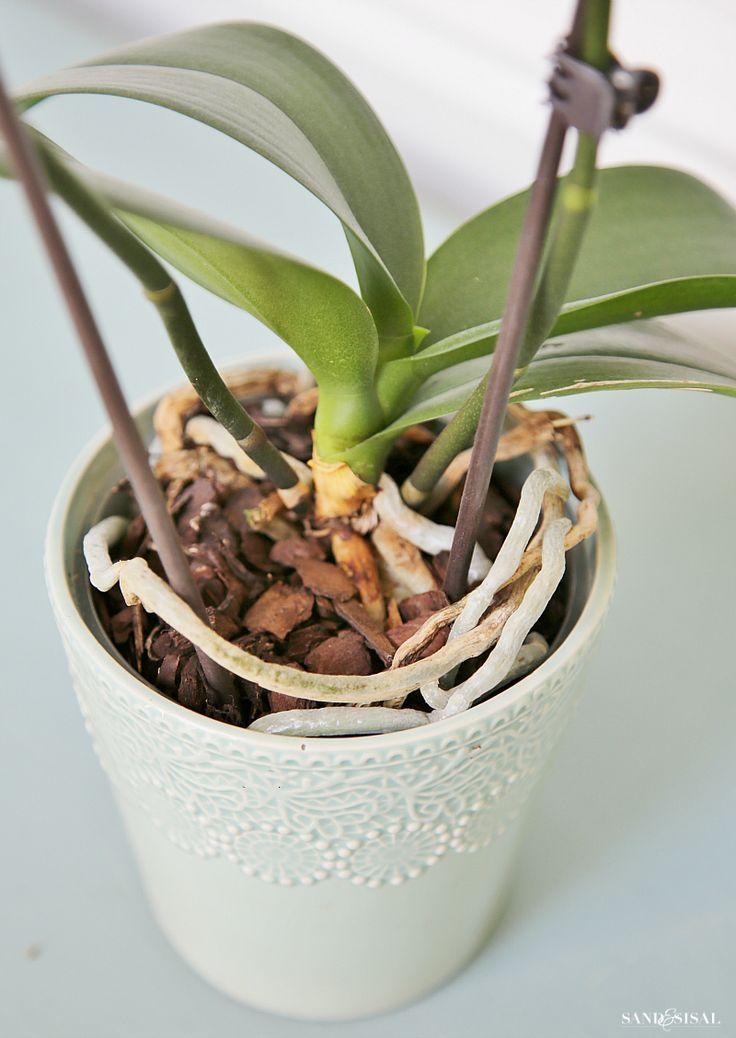 how to grow orchids a beginner 39 s guide flower gardening pinterest orchid e jardinage et. Black Bedroom Furniture Sets. Home Design Ideas