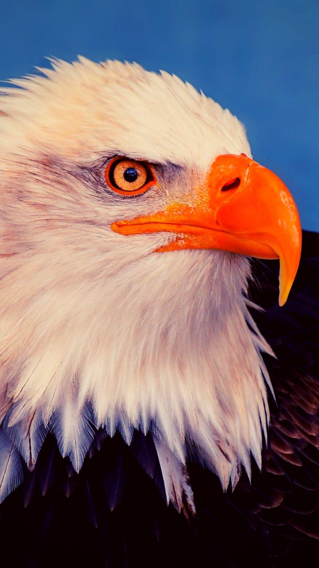 Eagle Iphone Wallpaper Best Hd Wallpaper Free Download Eagle Wallpaper Iphone Wallpaper Eagle Wallpaper Iphone Eagle images hd wallpaper download