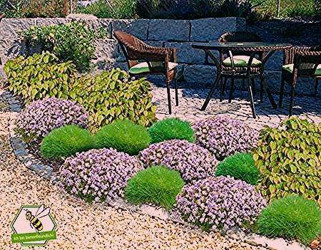 Photo of Mein schöner Garten Bodendecker-Set halbschattig, 14 Pflanzen