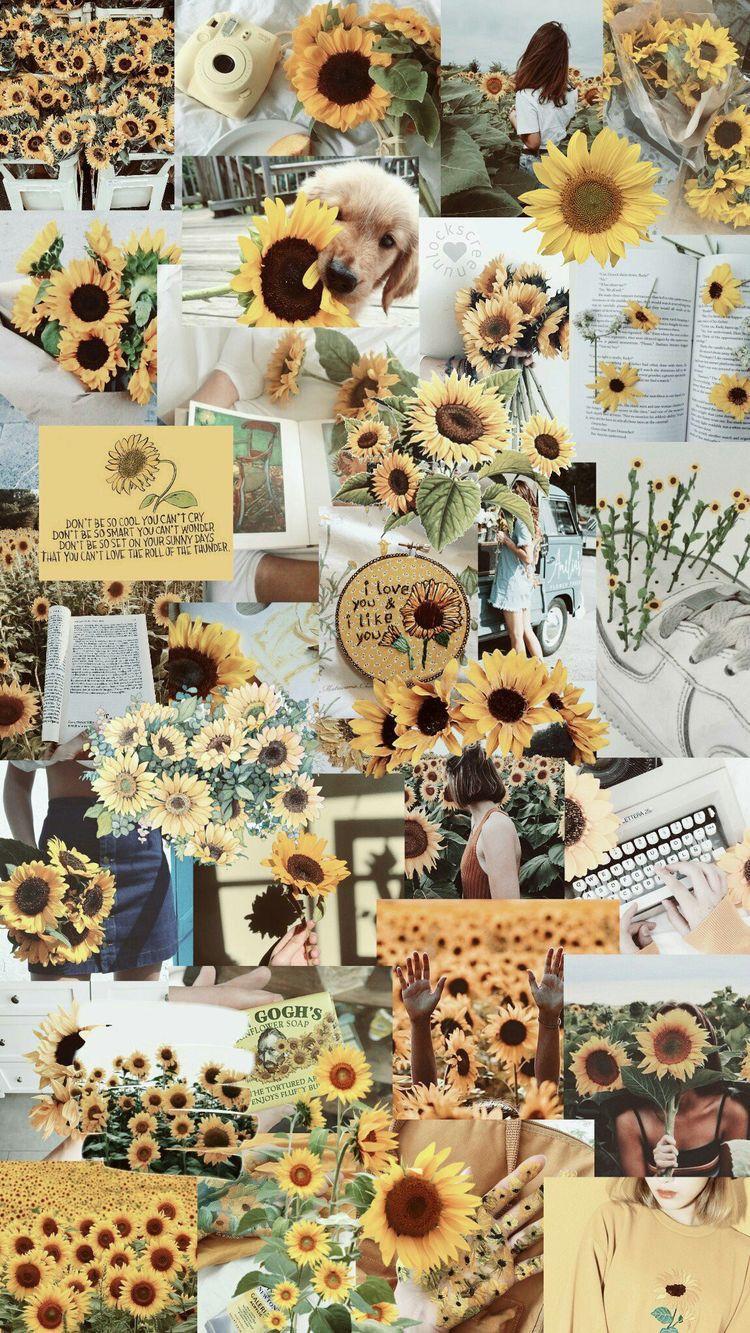 Aesthetic Pink Sunflower Wallpaper