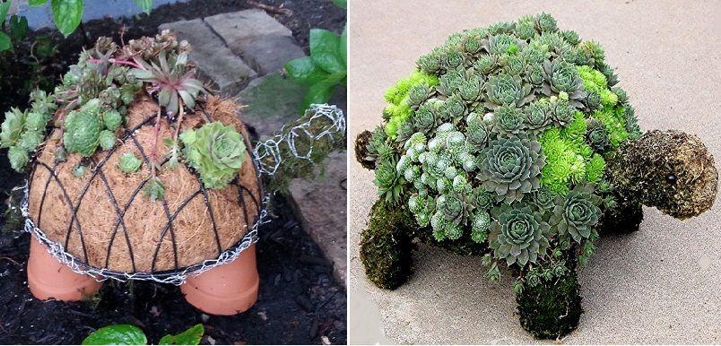 How To Make A Succulent Turtle Succulents Succulents Diy Plants
