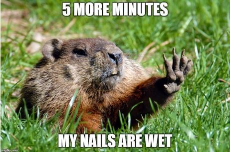 Happy #GroundhogDay! Looks like the Groundhog didn't see his shadow so you know what that means... SPRING IS COMING!