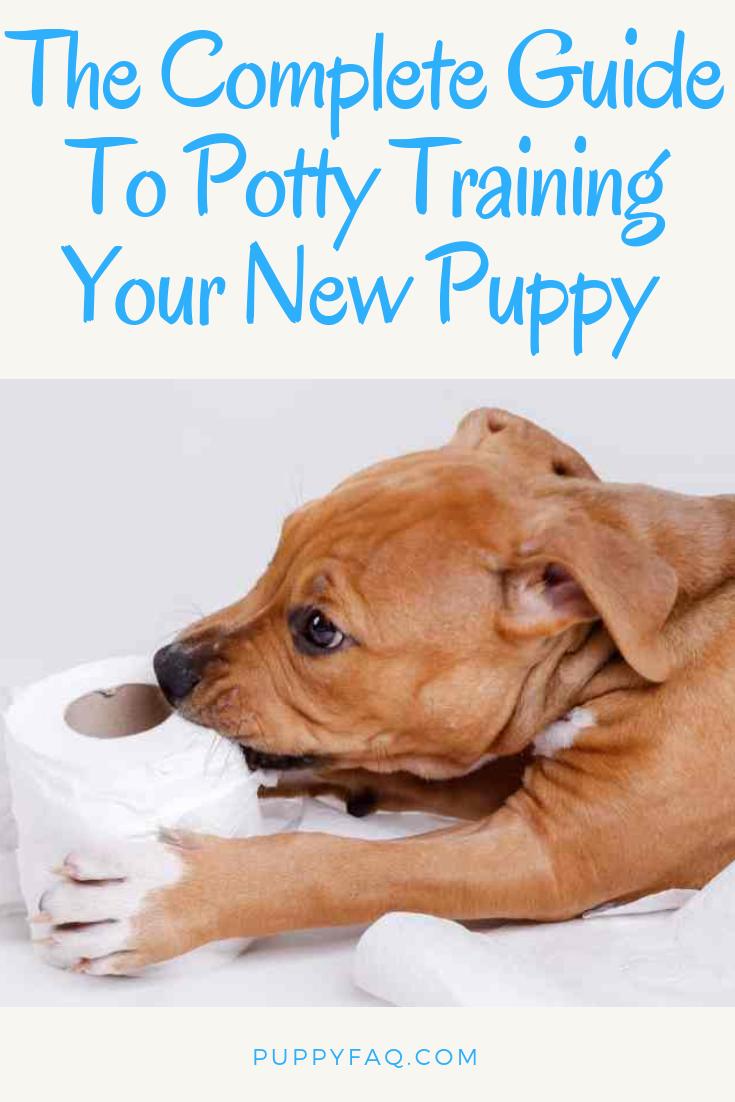 ac5e369cf9afb12d6740f6c6d6ec1270 - How To Get My Puppy To Use Puppy Pads