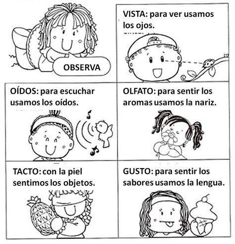 Los Sentidos Para Preescolar Buscar Con Google Bilingual Activities Kindergarten Fun Fun Science