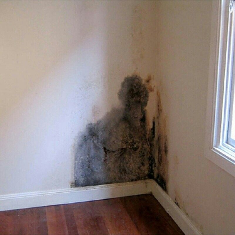 Got Mold Household Can Cause Illness In Most Cases Healthy People Recover