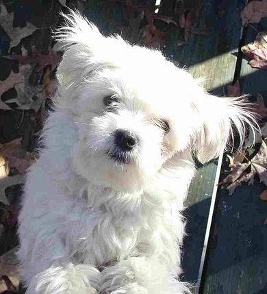 3 Ways To Train A Dog Not To Bark Dog Training Dog Training