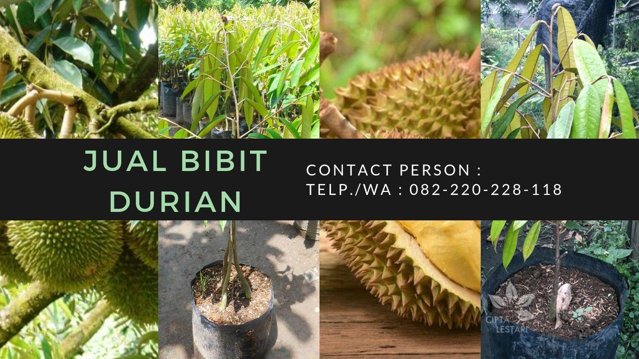 Kebun Durian Genjah