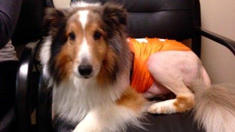via @CNN: Man's best friend gets a second chance at life; thanks to an extern. #dog #veterinarian