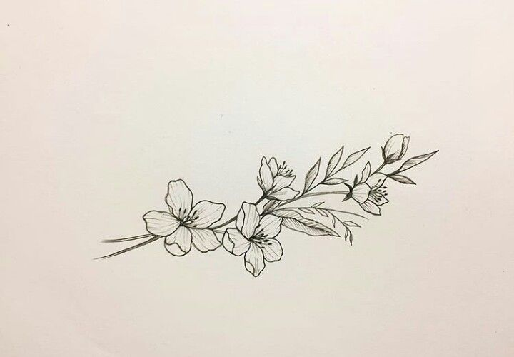 Cherry Blossoms Symbolize The Beauty And Fragility Of Life Jasmine Flower Tattoos Collar Bone Tattoo Tattoos