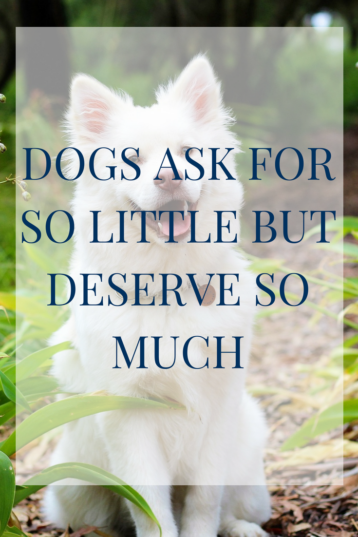 Give Your Four Legged What He Deserves Dogs Are Always Pampered At The Beazley House Dog Friends Happy Dog Quotes Dog Quotes