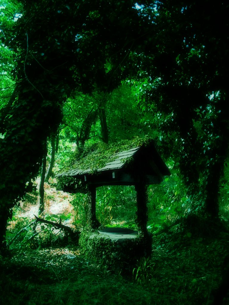 Stock: Forest by Randoms-Foundling.deviantart.com on @DeviantArt