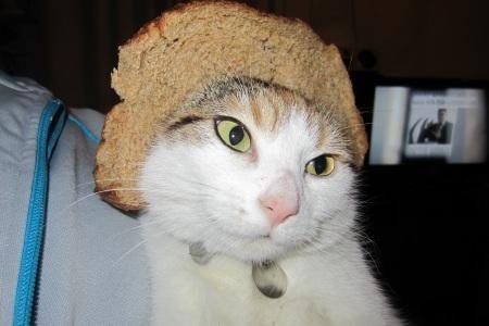 cat face in bread google search