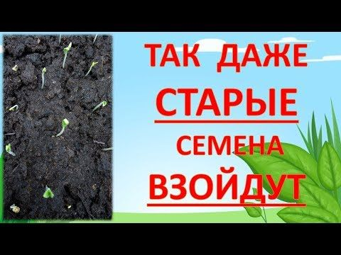 технология посева семян томатов на рассаду