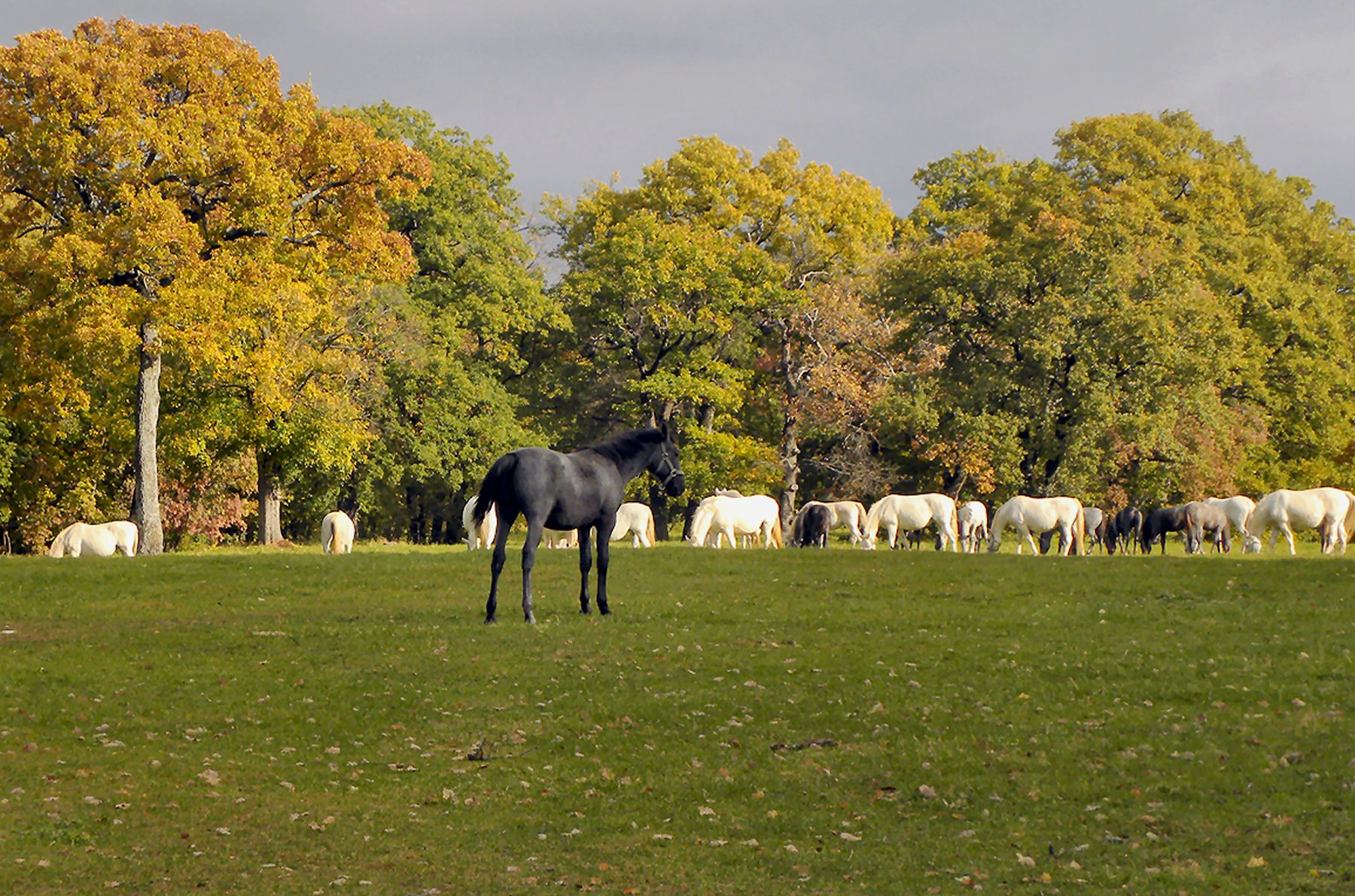 In the pasture season the entire herd is on pastures during the day ... for Most Beautiful Farms In The World  75sfw