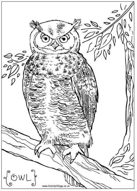 Owl Colouring Page Au0027s Night Owl Sleepover Party Pinterest Owl - copy baby owl coloring pages for adults