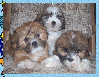 Renee S Wonderful World Of The Teddy Bear Puppy Genuine Atba
