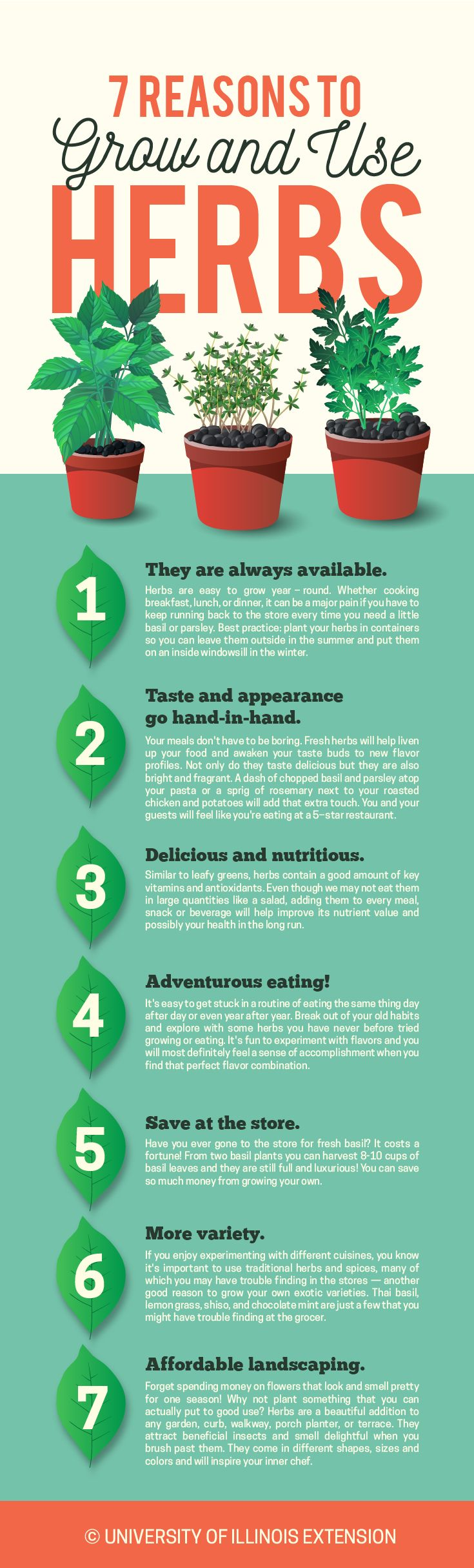 7 Reasons to Grow and Use Herbs #garden #kitchen   Gardening ...