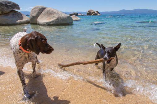 Pet Friendly Lodging At Lake Tahoe Zephyr Cove Resort Pet