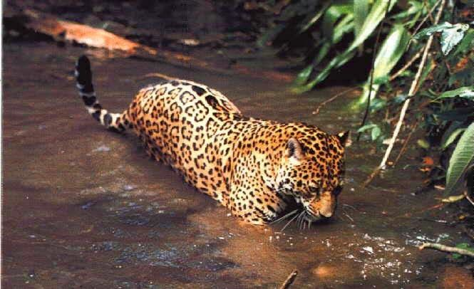 Amazon Rainforest Animals: Amazon Rainforest Animals : The ...