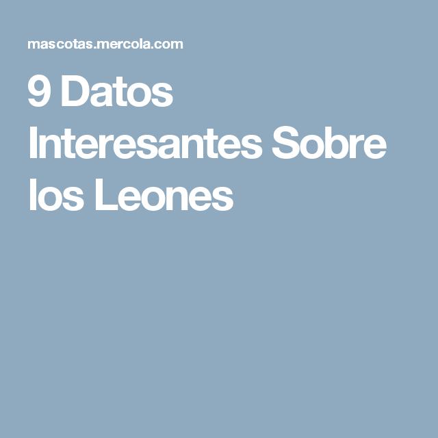 9 Datos Interesantes Sobre los Leones