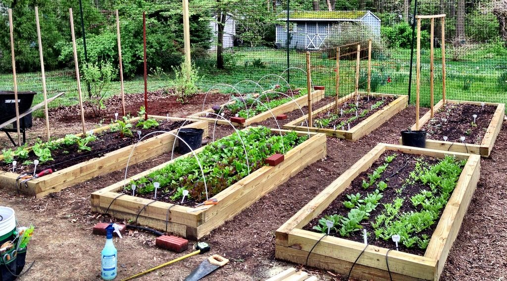 Homesteading in the Suburbs (With images) Backyard