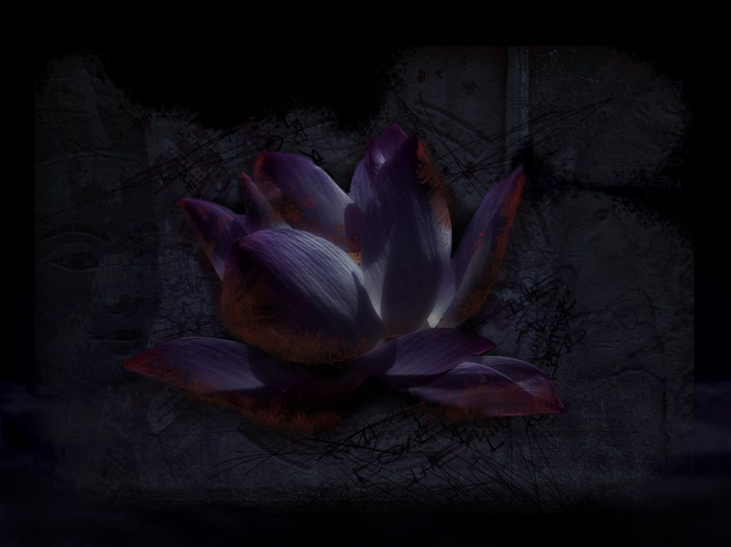 Black Lotus Flower Wallpaper For Android Natures Wallpapers