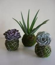 Bildergebnis f r kokedamas gie en deko hochzeit - Zimmerpflanzen groay ...