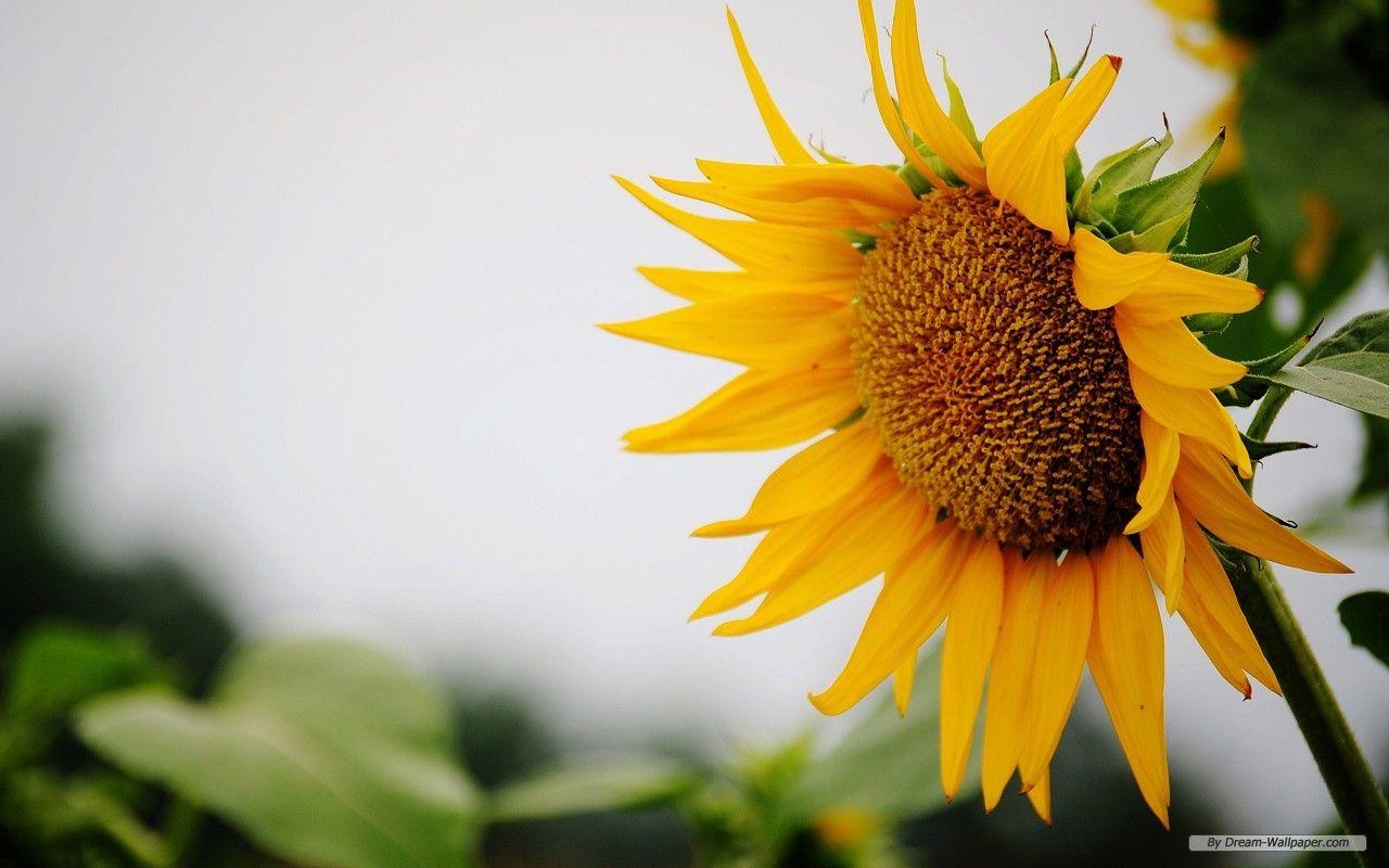 An Open Letter To Summer Desktop Wallpaper Summer Free Flower Wallpaper Summer Wallpaper