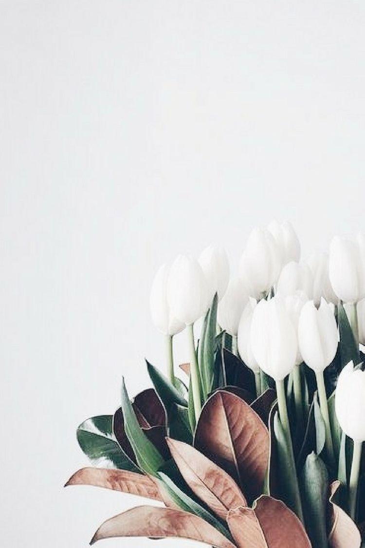 #wallpapers #tulips #sfondi