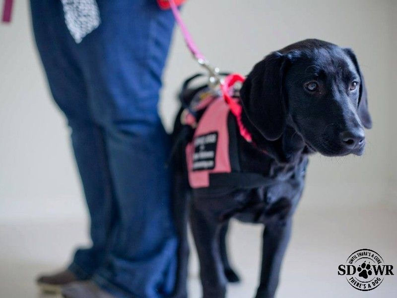 How To Teach A Dog To Be A Service Dog