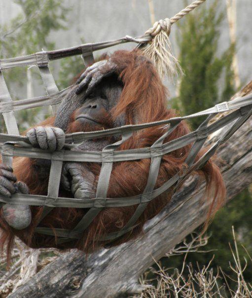 Pic I Took @ Denver Zoo-- Mias