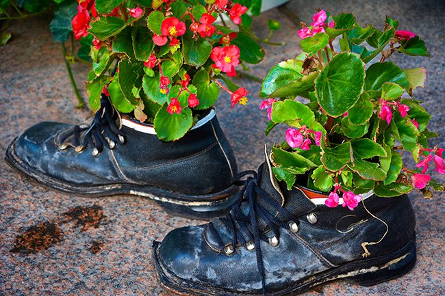 Flowers also grow well in a shoe.