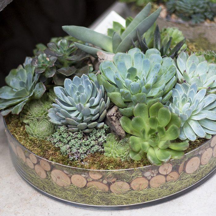 Indoor Outdoor Container Garden Arrangements Succulent Garden