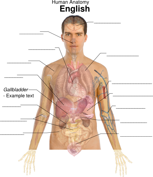This female diagram template labels important parts of the body ...
