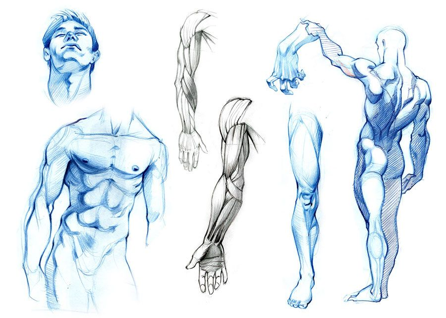 anatomy studies by ZurdoM.deviantart.com on @deviantART | Anatomy ...