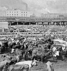 Chicago Stockyards in 1900 we still go to slaughter house in