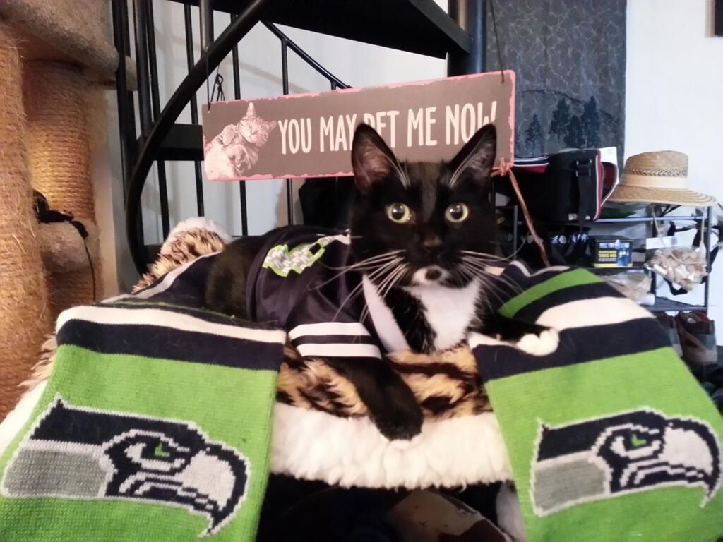 Seattle Sea 'Cat' fan Cats, Cat s, Tuxedo cat