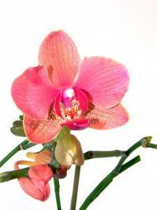 Growing Orchids Under Lights For Beginners Thumbnail 400 x 300