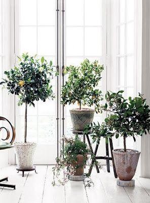indoor garden - love mini live plants on each table. wish fresh ...